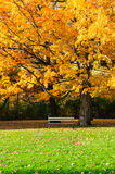 Maple Tree and Bench Stock Photos
