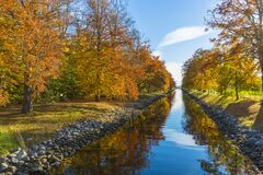 Maple Tree and Body of Water Photo Stock Image