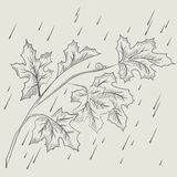Maple tree branch in the rain Stock Images
