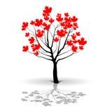 Maple Tree-Canada Stock Photos