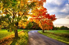 Maple tree with coloured leafs and asphalt road at autumn/fall daylight. Stock Photo