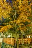 Maple tree and the historical Yasaka Shrine Royalty Free Stock Photography