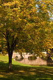 Maple Tree In October Stock Photography