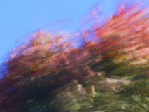 Maple tree leaves blown by the wind in fall Royalty Free Stock Photos