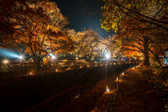 Maple tree in the lighting festival at Nashi Gawa Stock Images