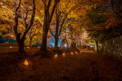 Maple tree in the lighting festival at Nashi Gawa Stock Photos