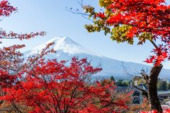 Maple tree and mountain Fuji Stock Photography