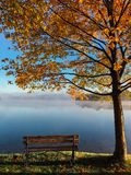 Maple Tree Near Brown Bench Near Body of Water during Daytime Photo Stock Photography