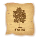 Maple Tree on Old Paper Royalty Free Stock Photography