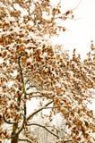 Maple tree in a park on winter. Retro styyle Royalty Free Stock Photo