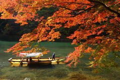 Maple tree and river Royalty Free Stock Photography