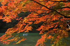 Maple tree and river Royalty Free Stock Photos