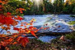 Scenic Autumn Michigan Park Background. Maple tree and sunbeams illuminate the banks of the Tahquamenon River in the Upper Peninsula of Michigan in Tahquamenon Royalty Free Stock Photo