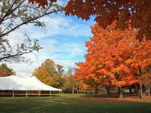 Maple tree and tent Stock Photography