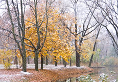 Maple Tree under snow Stock Photos