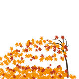 Maple tree in the wind, autumn. Fallen red and yellow leaves. illustration Stock Photos