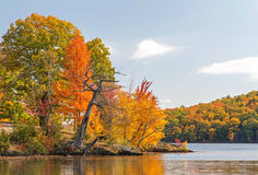 Maple trees. Acer saccharum and fall colors, Lake Taghkanic upstate rural New York Stock Image