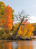 Maple trees. Acer saccharum and fall colors, Lake Taghkanic upstate rural New York Stock Photo