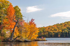 Maple trees. Acer saccharum and fall colors, Lake Taghkanic upstate rural New York Royalty Free Stock Image