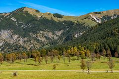 Maple trees at Ahornboden, Karwendel mountains, Tyrol, Austria. Autumn view of the maple trees at Ahornboden, Karwendel mountains, Tyrol, Austria royalty free stock images