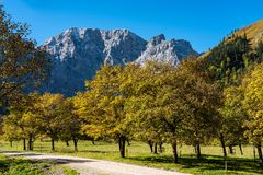 Maple trees at Ahornboden, Karwendel mountains, Tyrol, Austria. Autumn view of the maple trees at Ahornboden, Karwendel mountains, Tyrol, Austria stock image