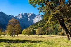 Maple trees at Ahornboden, Karwendel mountains, Tyrol, Austria. Autumn view of the maple trees at Ahornboden, Karwendel mountains, Tyrol, Austria royalty free stock image