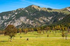Maple trees at Ahornboden, Karwendel mountains, Tyrol, Austria. Autumn view of the maple trees at Ahornboden, Karwendel mountains, Tyrol, Austria royalty free stock photo