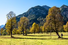 Maple trees at Ahornboden, Karwendel mountains, Tyrol, Austria. Autumn view of the maple trees at Ahornboden, Karwendel mountains, Tyrol, Austria stock photography