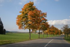 Maple trees with coloured leafs and asphalt road at autumn/fall daylight Royalty Free Stock Photos