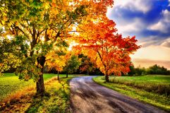 Maple trees with coloured leafs and asphalt road at autumn/fall daylight Stock Photography