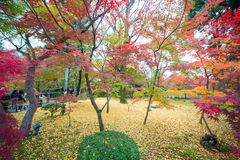 Maple trees with fall foliage colors at Eikando temple. Kyoto, Japan royalty free stock photography