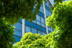Maple trees in front of modern building. Closeup of maple trees in front of modern building stock images
