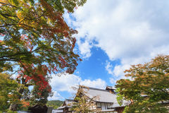 Maple trees in the garden against blue sky at Kinkakuji temple. Kyoto, Japan Royalty Free Stock Photos