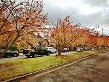 Maple trees @ Leura Town, Blue Mountains. Beautiful yellow and red maple trees in Leura, Blue Mountains NSW Australia royalty free stock photography