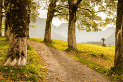 Maple trees at a mountain trail Royalty Free Stock Photos