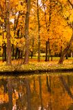 Autumn park maple trees pond. Maple trees in a park at the shore of pond by an autumn day with yellow, and red foliage and reflections in the water surface royalty free stock photos