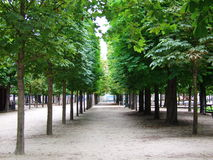Maple trees at Tuileries garden, Paris, France Stock Photos