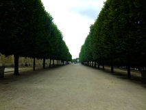 Maple trees at Tuileries garden, Paris, France Stock Photo