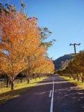 Maple trees on Wisemans Ferry Road, Australia. Maple trees on Wisemans Ferry Road in Wisemans Ferry NSW Australia royalty free stock photo