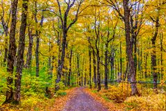 Fall colorful in New Brunswick, Canada. Maple tress in changing season, Fall colorful in New Brunswick, Canada royalty free stock photo