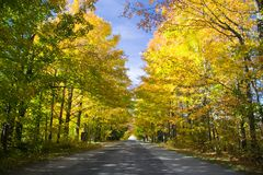 Maple tunnel Royalty Free Stock Photo