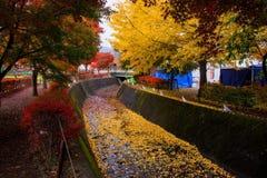 Maple tunnel in autumn, Kawaguchiko Stock Photography