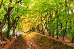 Maple Tunnel in Japan Royalty Free Stock Photo