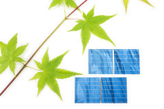 Maple twig and solar cells Stock Photo