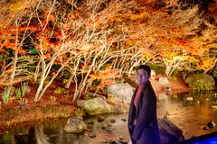 Maple Vibrant Autumn foliage in Nabana No Sato park, Japan royalty free stock image