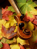 Maple Violin Scroll & Maple Leaves. Detail of violin scroll and neck over colorful autumn leaves... maple tree to maple violin (German-made copy of Josef Royalty Free Stock Image