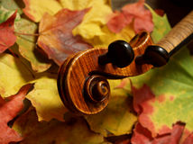 Maple Violin Scroll & Maple Leaves. Detail of violin scroll and neck over colorful autumn leaves... maple tree to maple violin (German-made copy of Josef Stock Images