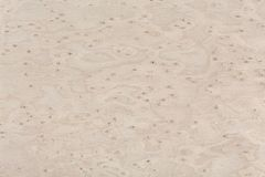 Maple Wood Design Texture. Natural Background Closeup. Stock Photo