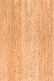 Maple wood pattern Stock Photography