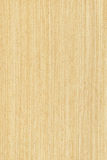 Maple (wood texture). Texture of maple (high-detailed wood texture series Royalty Free Stock Photo